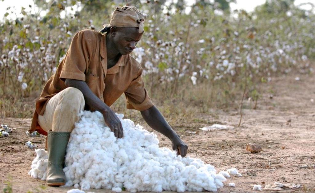 Le coton -Togo